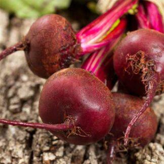 beet seeds