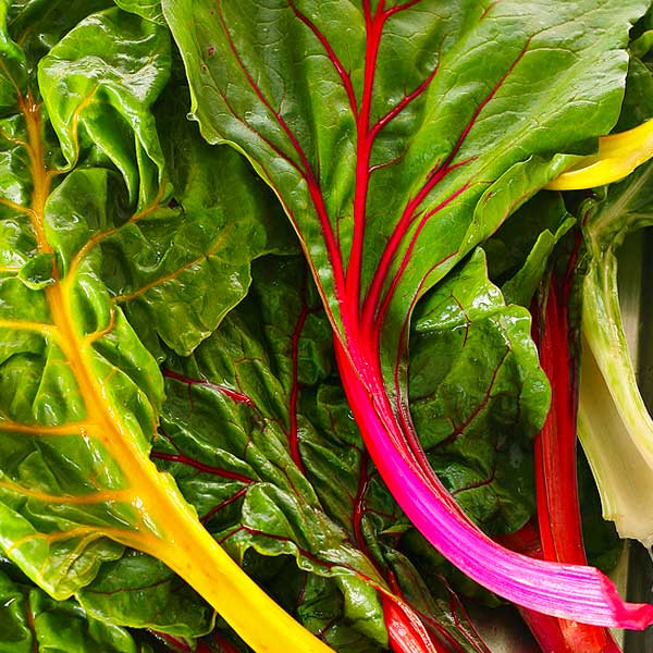 "... first to review ""Organic Rainbow Swiss Chard Seeds"" Cancel reply"